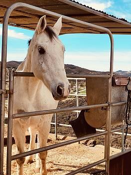 Horse by Gary Dunkel