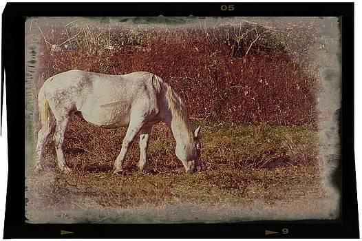 Horse Grazing by John Benedict