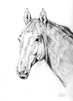 Horse Head Profile by Heidi Kunkel