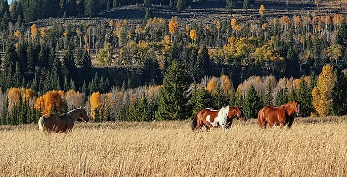 Horse Holiday by Patty Plummer
