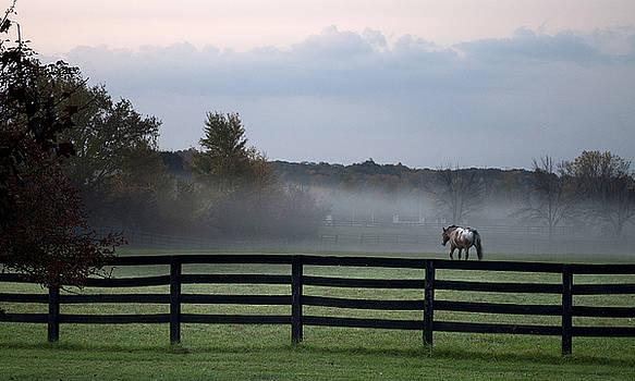 Horse in Evening Pasture by Samantha Boehnke