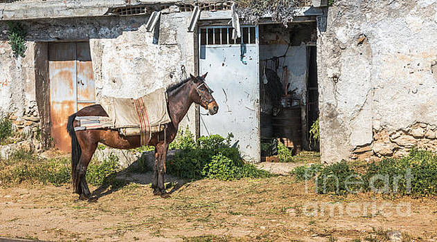 Compuinfoto - horse  in front of house in andalusia