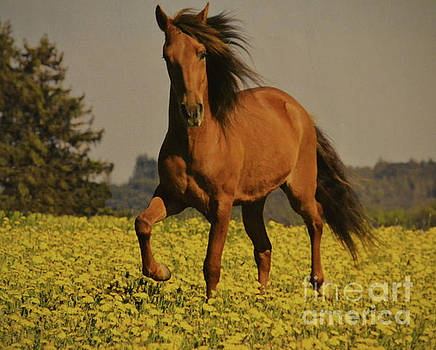 Horse In Meadow Of Flowers  by Ruth Housley