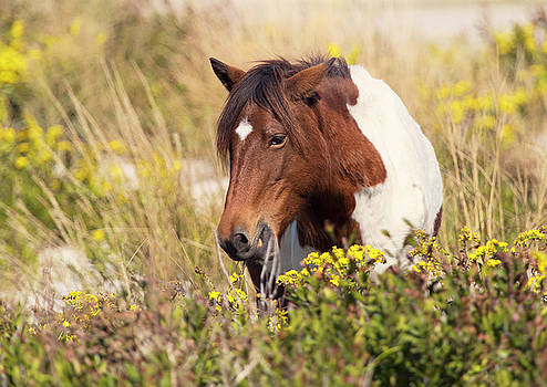 Horse in Meadow by Stephanie McDowell