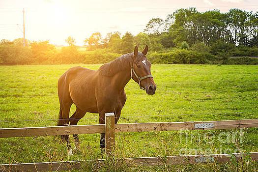 Sophie McAulay - Horse in morning light