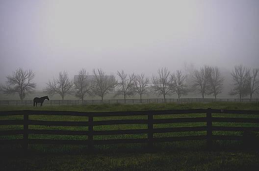 Horse in Pasture at Dawn by Samantha Boehnke