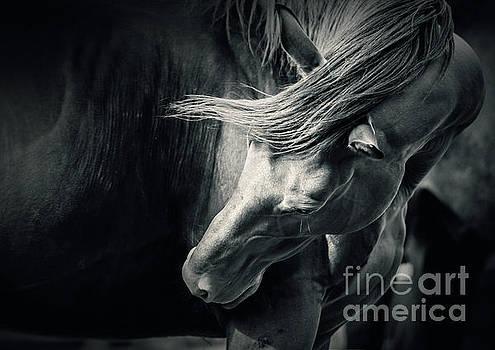 Dimitar Hristov - Horse in Pose Black and White Portrait