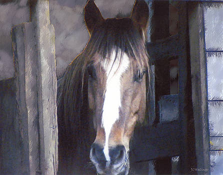 Horse in Stall by Joe Halinar