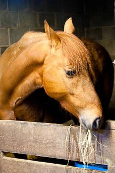 Horse in Stall by Samantha Boehnke