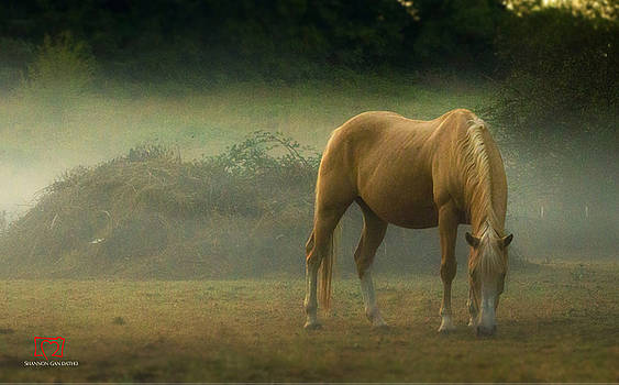 Horse in the Mist by Shannon Gan Dathu