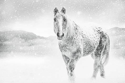 Horse In Winter Snow Storm by Debi Bishop