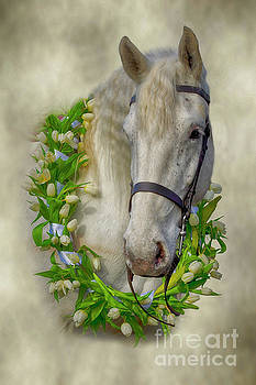 Horse by Linsey Williams
