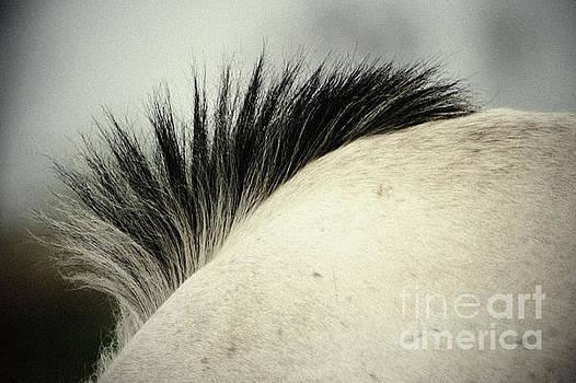 Horse Mane by Dimitar Hristov