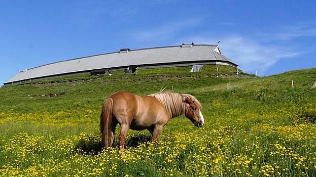 Horse on a fiels in Norway by Tamara Sushko
