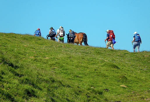 Horse on the Camino by Mike Shaw