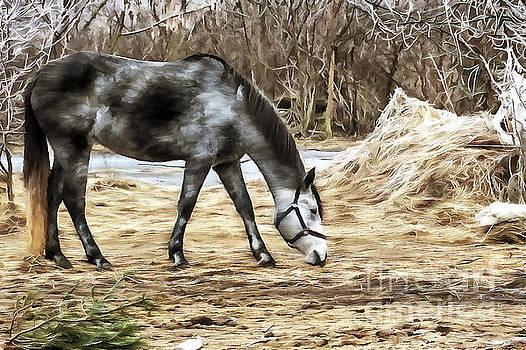 Horse on the farm by Odon Czintos