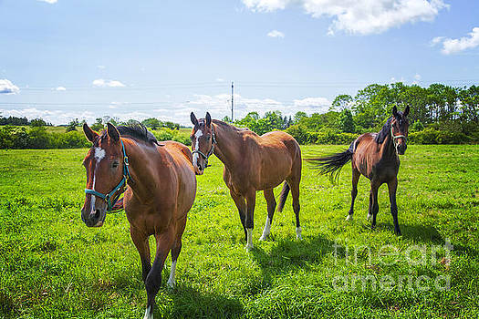 Sophie McAulay - Horse paddock