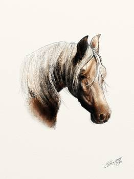 Horse Pencil Study Colour by Hannah Starrett Wright
