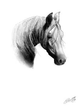 Horse Pencil Study by Hannah Starrett Wright