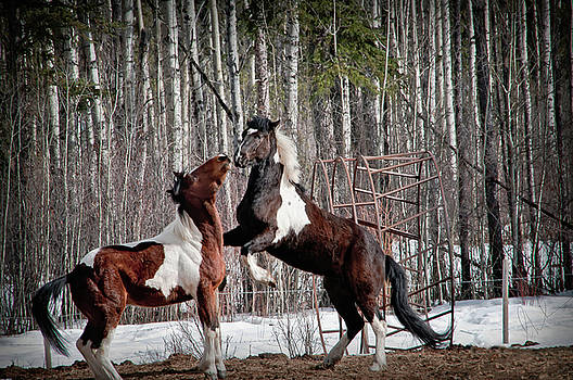 Horse Play by Steve  Milner