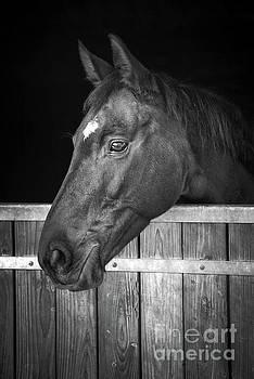 Delphimages Photo Creations - Horse portrait