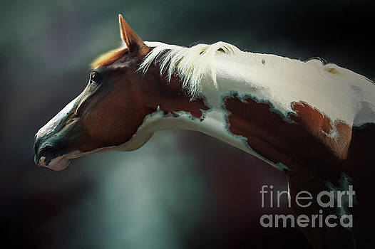 Horse Portrait by Dimitar Hristov
