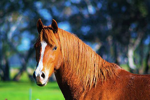 Horse Portrait  by Naomi Burgess