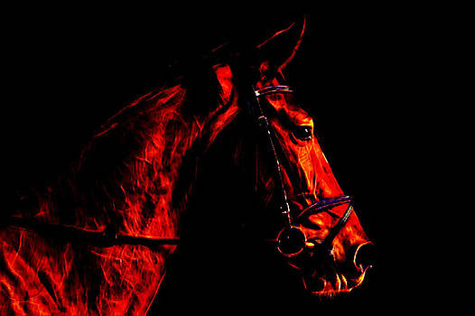 Horse portrait by Oscar George