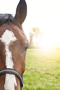 Sophie McAulay - Horse portrait