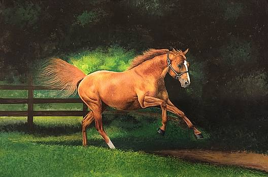 Horse by Rajesh