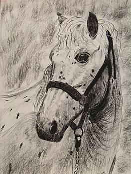 Horse by Sherri Ward
