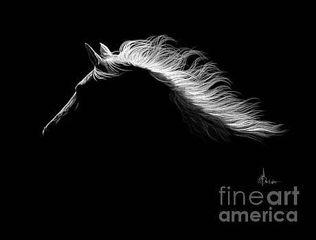 Horse silhouette  by Murphy Elliott