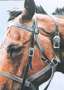 Horse Study by Steve Greco