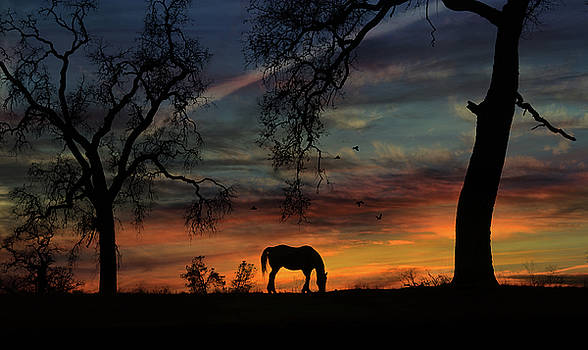 Horse Sunrise and Oak Trees with Birds Pasture by Stephanie Laird