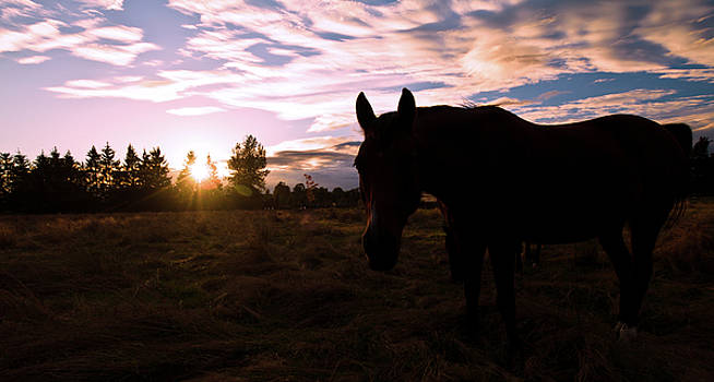 Horse Sunset by Michael Thibault