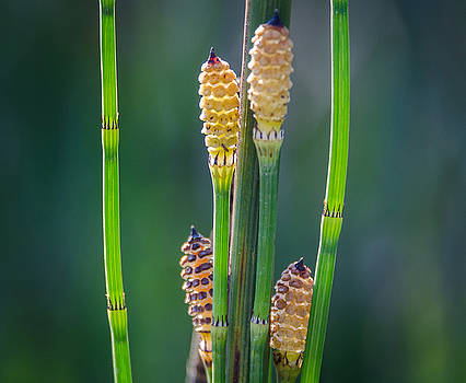 Horse Tail2 by Don L Williams