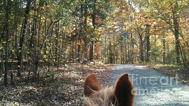 Horse Trail by Mary Tron