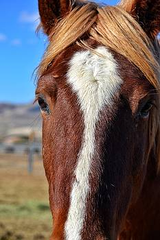 Horse up close by SoxyGal Photography
