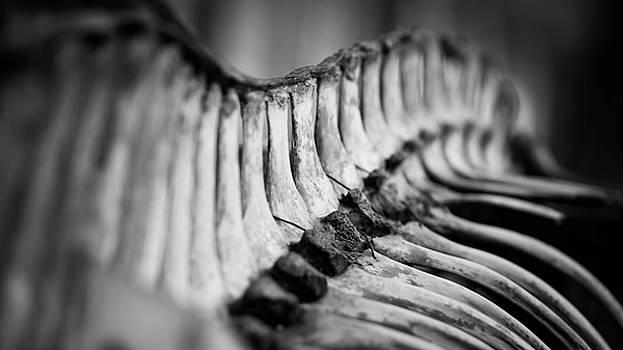 Horse vertebrae by Timothy Lens Attack
