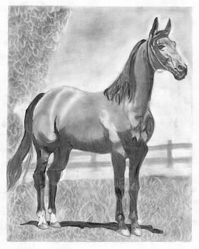 Horse  by Vishal Chavan