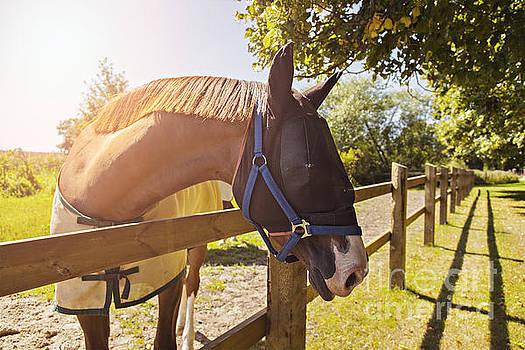 Sophie McAulay - Horse with mask