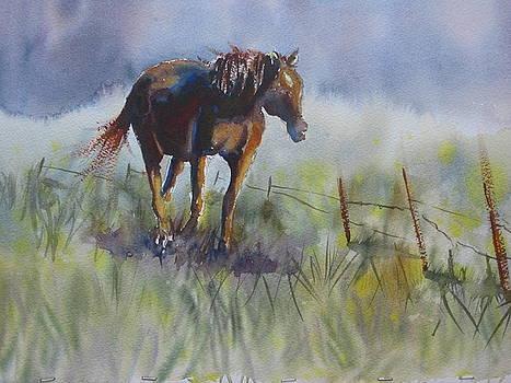 Horse www.shirleycharlton.com  by Shirley Roma Charlton