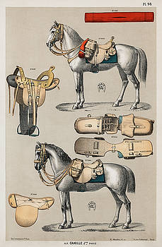 Horseback riding equipments by Unknown