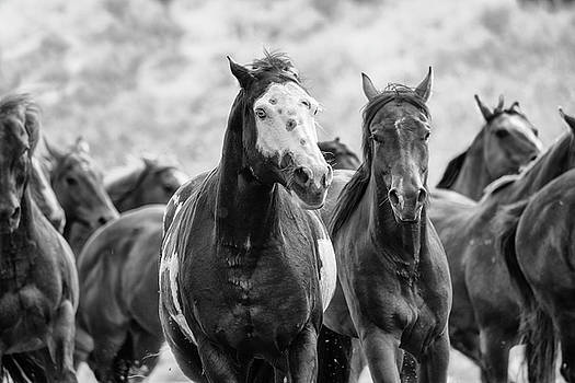 Horsepower by Ryan Courson