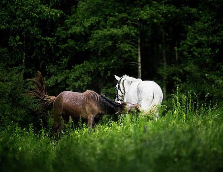 Horses 2 by Ivan Vukelic
