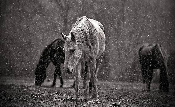 Horses 3 by Scott Fracasso
