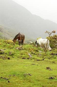 Horses by Alexa Gurney