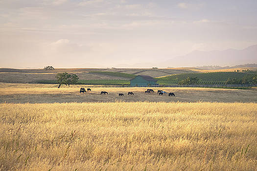 Horses and Barn by Alexander Kunz