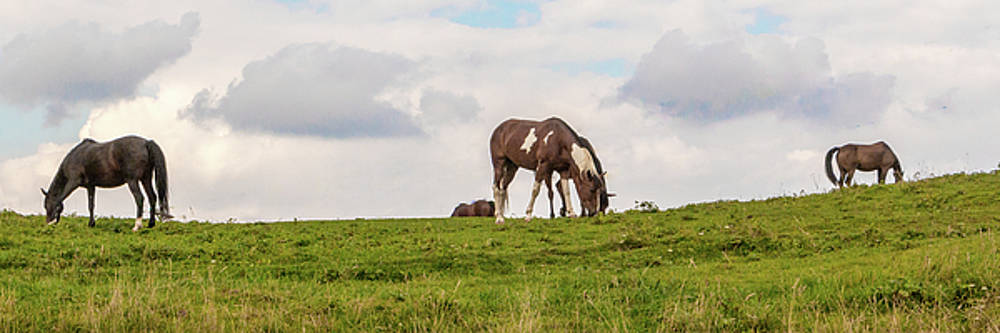 Horses and Clouds by D K Wall