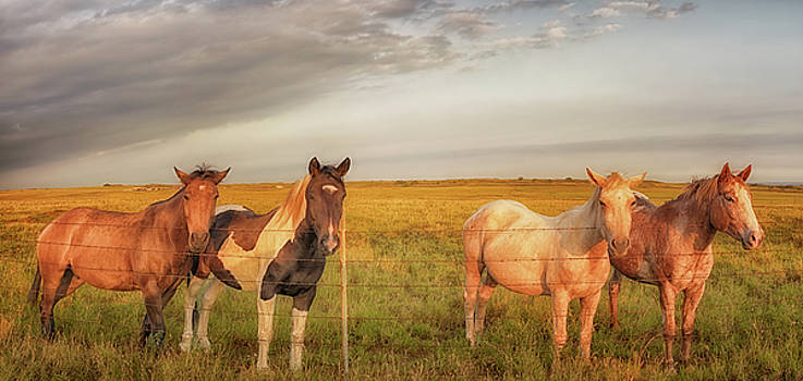 Susan Rissi Tregoning - Horses at Kalae